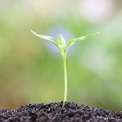 Selvudvikling, plante vækst